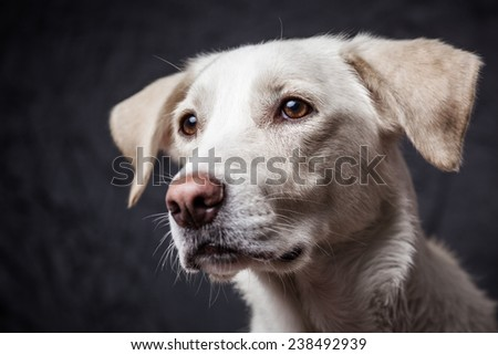 Color portrait of a cute dog in a studio - stock photo
