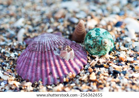 Color sea shell's on the beach - stock photo