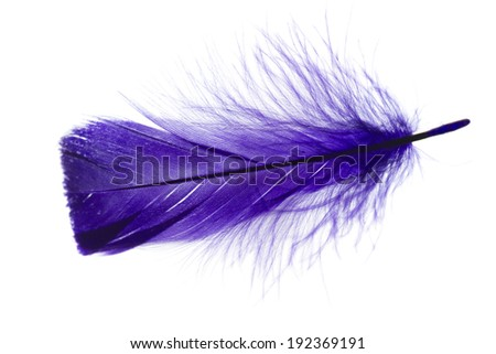 color single feather on white background in top view with back light