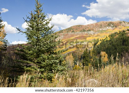 Colorado Autumn with golden aspens, green firs and beautiful blue sky