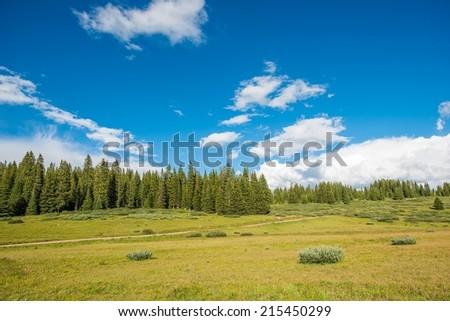 Colorado Green Blooming Summer Meadow Landscape. Scenic Colorado. - stock photo