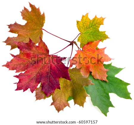 Colored autumn leaves isolated on white - stock photo