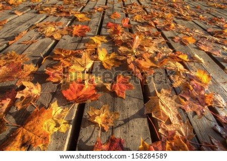 Colored autumn leaves on wooden planks - stock photo