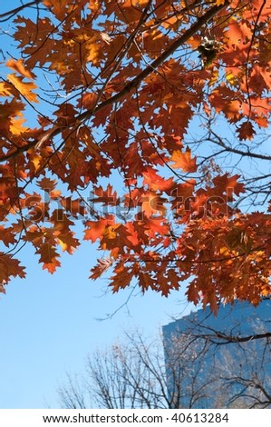 Colored autumn leaves with urban background - stock photo