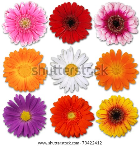 Colored blooms isolated on white - stock photo