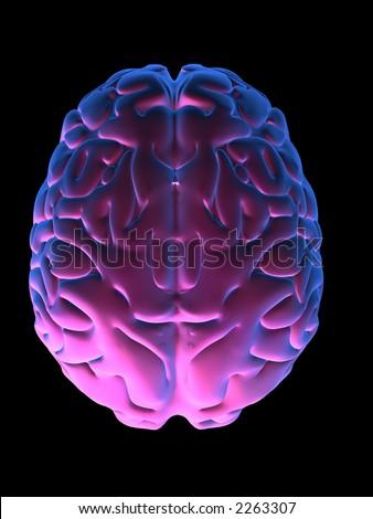 colored brain - stock photo