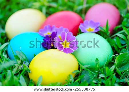 Colored easter eggs with flowers primrose on green grass - stock photo