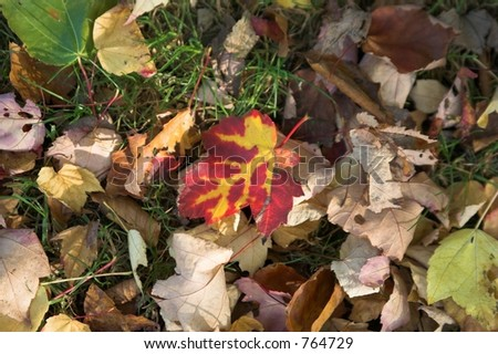 Colored fall leafs lying on the ground