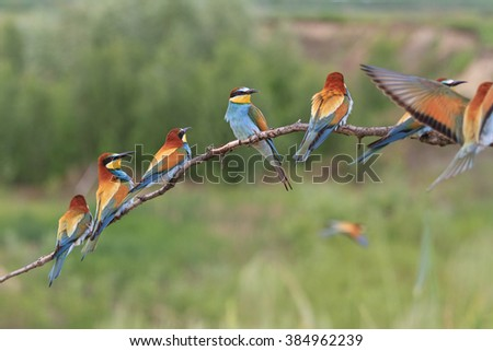 colored flock of birds sitting on a branch on a sunny day - stock photo