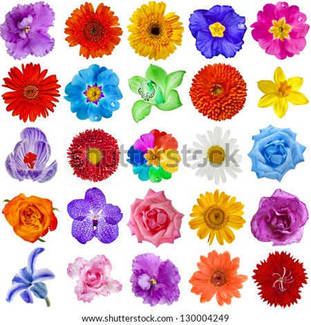 Colored Flower heads collection set isolated on white background - stock photo