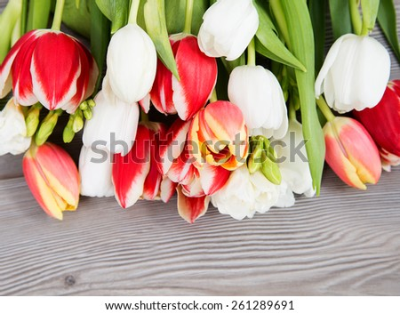 colored flower, spring colored tulip - stock photo
