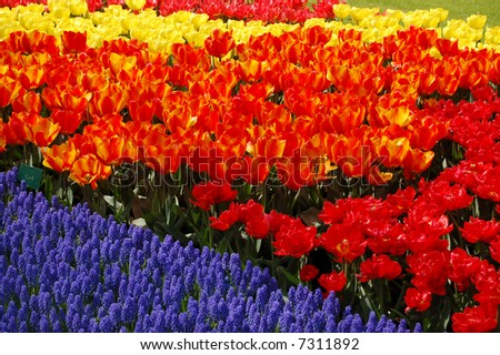 Colored flowers - stock photo