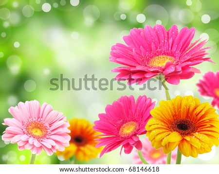 colored gerberas flowers with blur shimmer background - stock photo