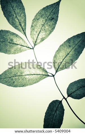 Colored grungy mystical leaves. Stydio shot with light spot in centre - stock photo