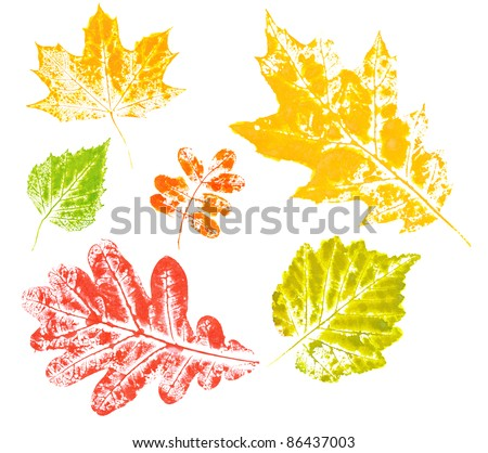 Colored imprint of autumn leaves isolated on white background in high resolution - stock photo