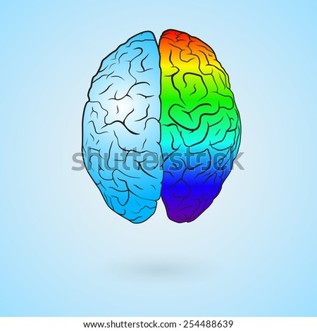 Colored left brain and right brain. Concept illustration.