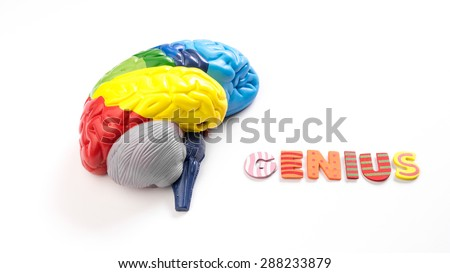 Colored map brain anatomy model with wooden alphabet letter of GENIUS. Isolated on white background.
