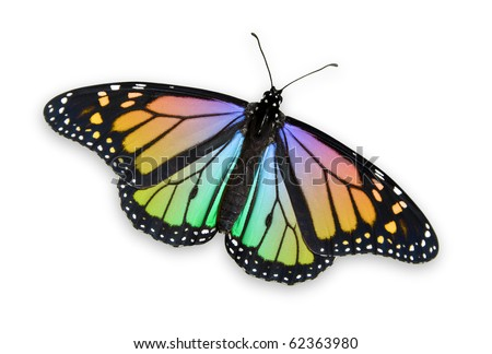 Colored Monarch Butterfly - stock photo