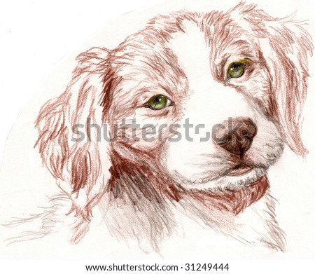 Colored Pencil Sketch of a Britney Spaniel Puppy. - stock photo