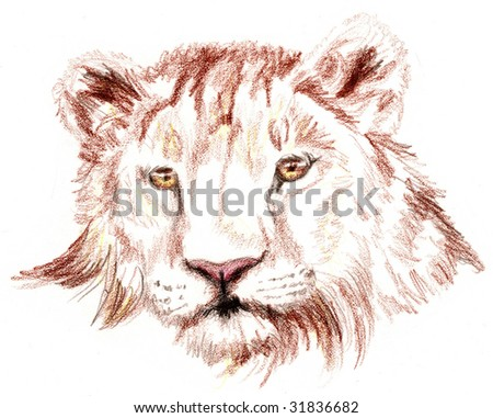 Colored Pencil Sketch of a lion - stock photo