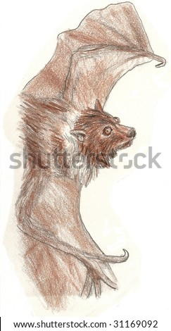 Colored Pencil Sketch of a small brown bat - stock photo