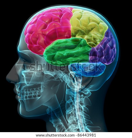 Colored sections of a male human brain ,x ray concept. Part of a medical series - stock photo