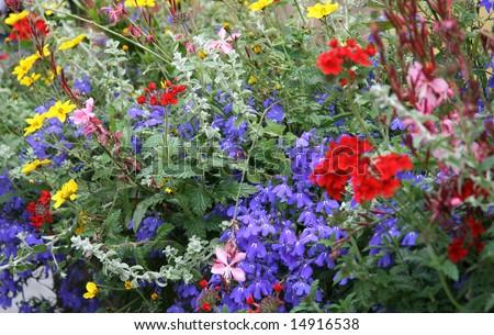 colorefull flowers - stock photo