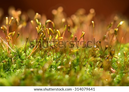 Colorful abstract natural background of green moss and seeds with water drops closeup on blurred red background of fire - stock photo