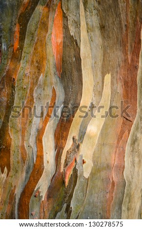 Colorful abstract pattern of Eucalyptus deglupta tree bark - stock photo