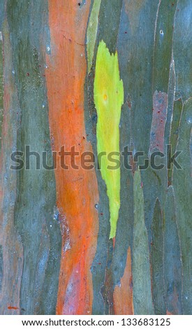 colorful abstract pattern of rainbow eucalyptus tree bark. - stock photo