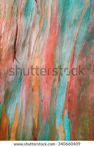 Colorful abstract pattern texture of Eucalyptus tree bark - stock photo