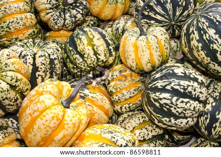 Colorful acorn or winter squash on display at the farmers market - stock photo