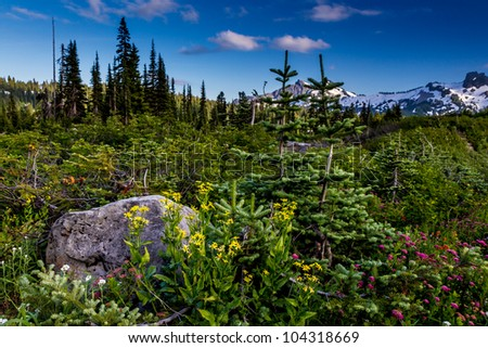 Colorful Alpine Meadow at Paradise on Mount Rainier in August 2011. - stock photo