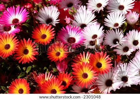 Colorful and blossoming summer flowers in a flowerbed