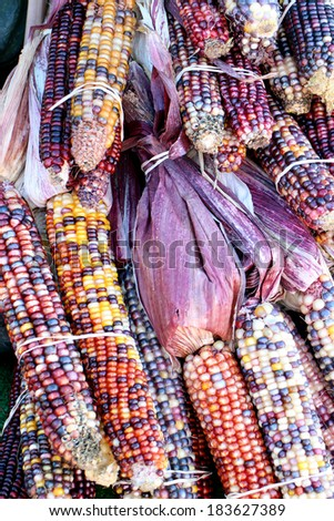 Colorful and decorative Indiana corn bunch at market place