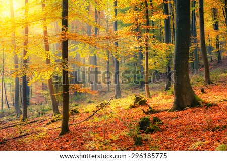 Colorful and foggy autumn forest