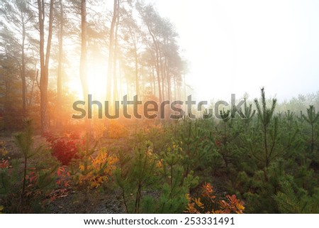 Colorful and sunny morning in nature scene - stock photo