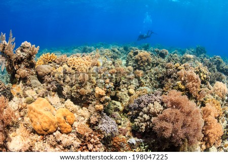 Colorful and thriving coral and a SCUBA diver swimming in the distance - stock photo