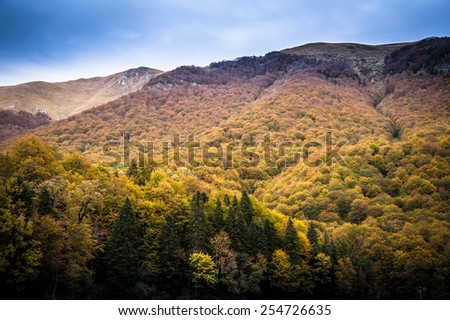 Colorful and vibrant autumn mountain forest showing dramatic shades of foliage - stock photo