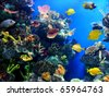 Colorful aquarium, showing different colorful fishes swimming - stock