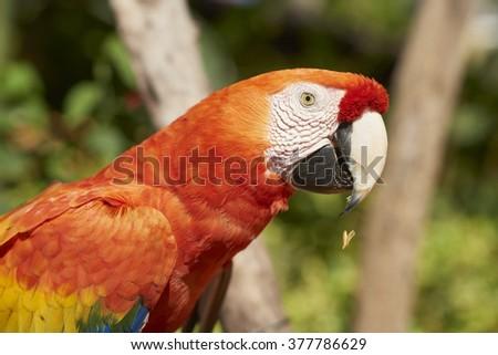 Colorful Ara Parrot - stock photo