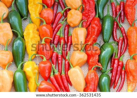 Colorful arrangement of hot peppers - stock photo