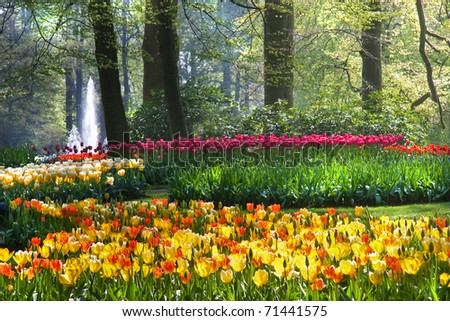 Colorful arrangement of tulips on sunny morning in spring - stock photo