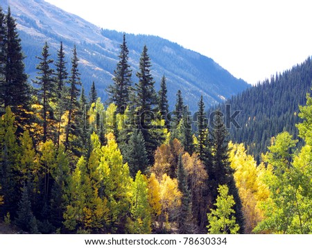 Colorful Aspen and Pine at high altitude in the Colorado Rocky Mountains - stock photo
