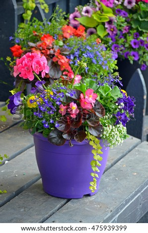 Colorful assorted flowers in purple planter