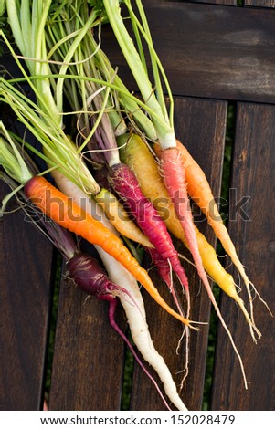 Colorful assortment of fresh organic carrots just picked from the garden shot on a wood table. - stock photo