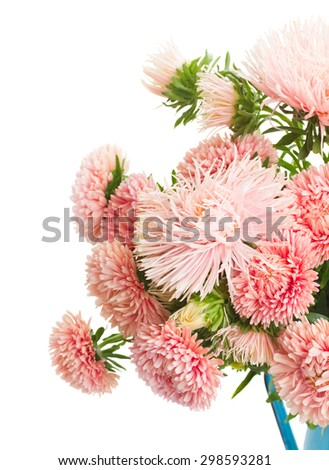 colorful  aster flowers bouquet  cloe up isolated on white background - stock photo