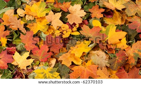colorful autumn background - stock photo