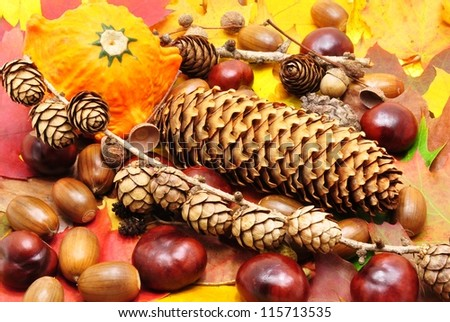 Colorful autumn background made up of chestnuts, acorns, pinecones ... - stock photo