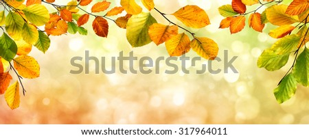 Colorful autumn beech leaves border on a beautiful nature bokeh background, wide panorama format - stock photo